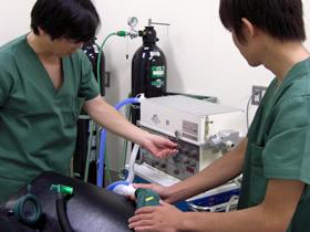 入学後に生体工学技術者になるか臨床工学技士になるか選択できる